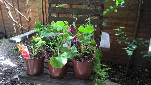 Cheap B&Q Plants