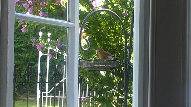 A Robin On The Bird Feeder