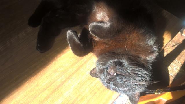 Cleo The Cat Enjoying A Sleep In The Sun